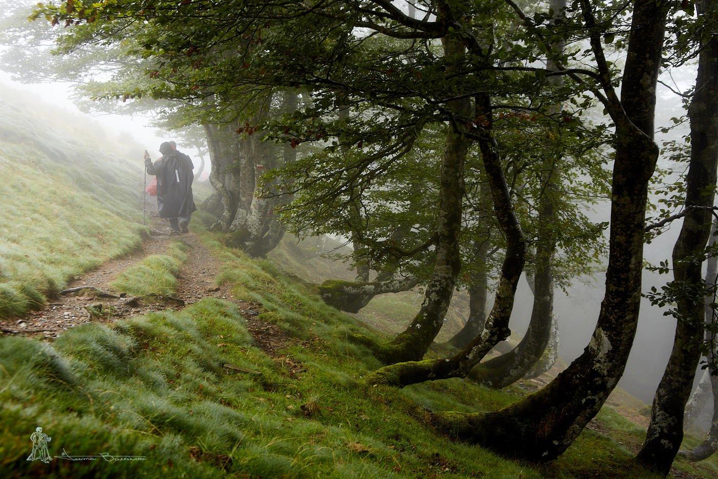 El verano de las nieblas (Txema Bacaicoa (Colectivo IS))