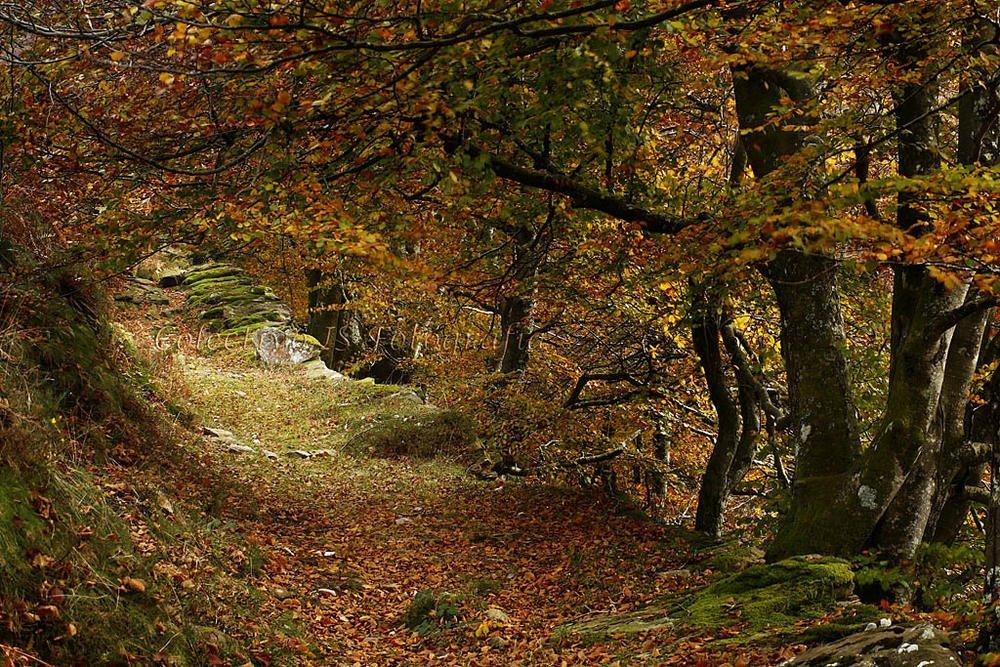 El viejo camino (Txema Bacaicoa (Colectivo IS))