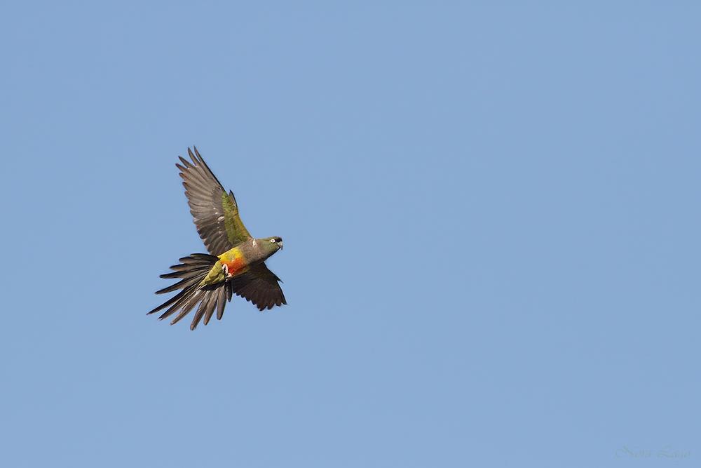 El vuelo del barranquero (Norma   Betty Lago)