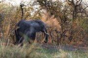elefante empolvado I