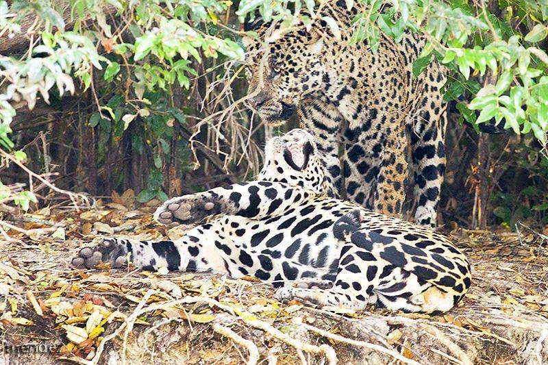 En el Pantanal (claudio Mendez)