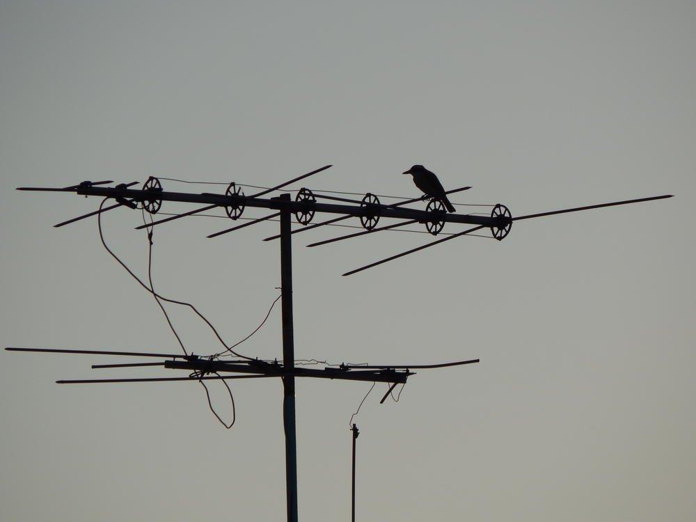 En la antena (Javier Tabares)
