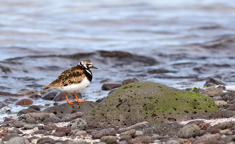 En la costa, Islandia 60 (david Pérez Hens)