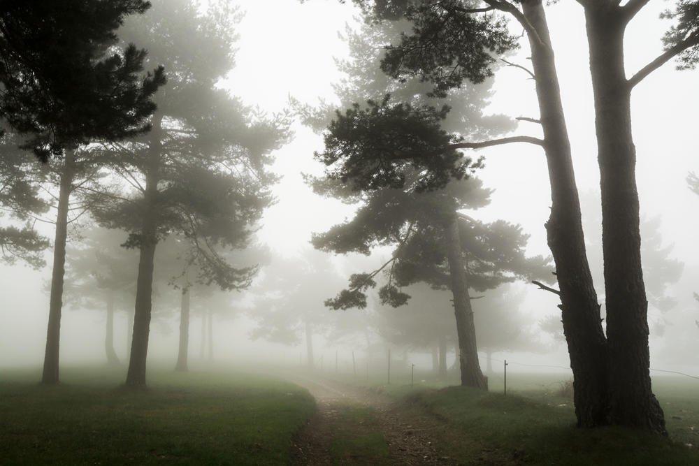 Entre la niebla (Josep Escayol Farran)