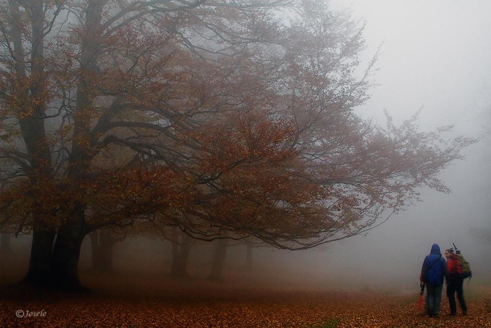 Entre niebla (José Arcos Aguilar)