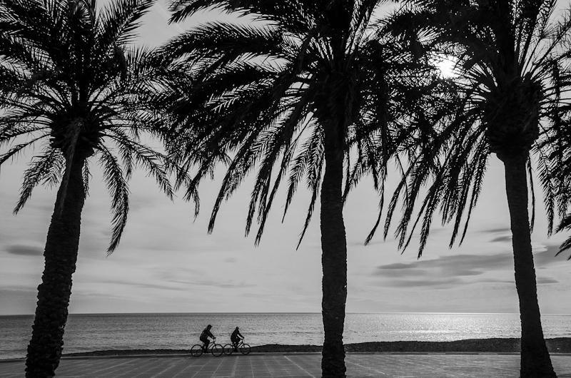 Entre palmeras (Abrahan Manuel Francisco)