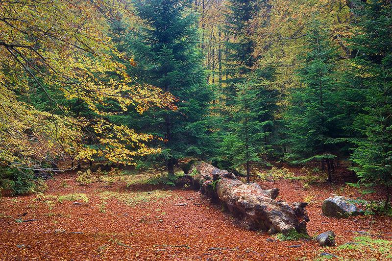 Esperando al otoño 6. (david Pérez Hens)