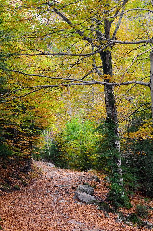 Esperando al otoño, pero con agua. (david Pérez Hens)