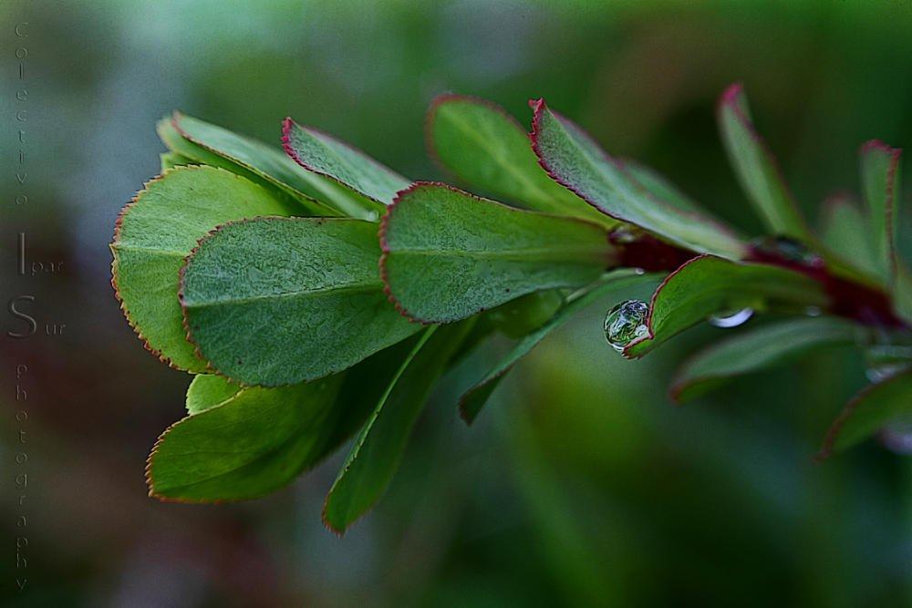Euphorbia (Txema Bacaicoa (Colectivo IS))