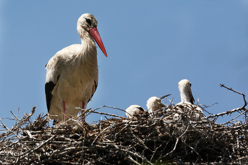 Familia numerosa (Txema Bacaicoa (Colectivo IS))