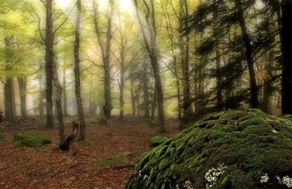 Fantaseando el bosque (Salvador Solé Soriano)