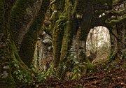 Fantasía forestal