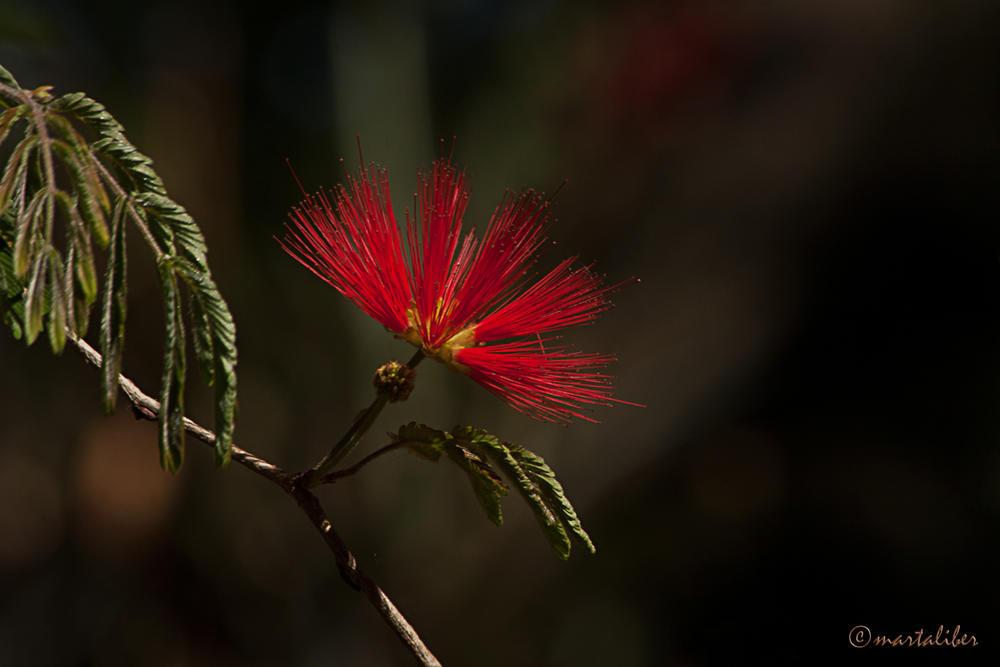 Flor (marta Liber)
