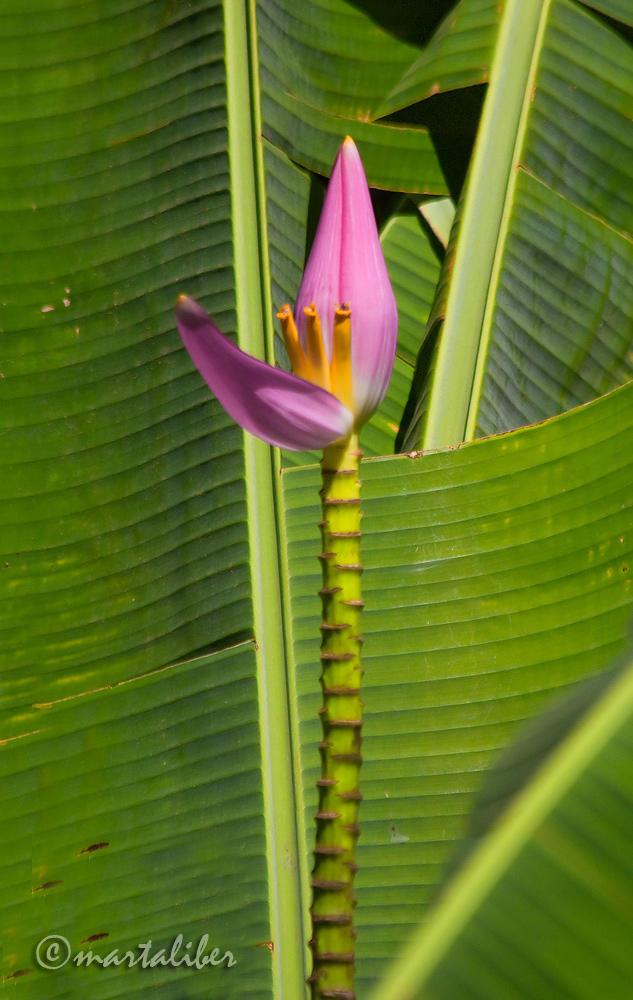 Flor de Tucán (marta Liber)