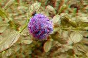 Flor en 3D monotoma