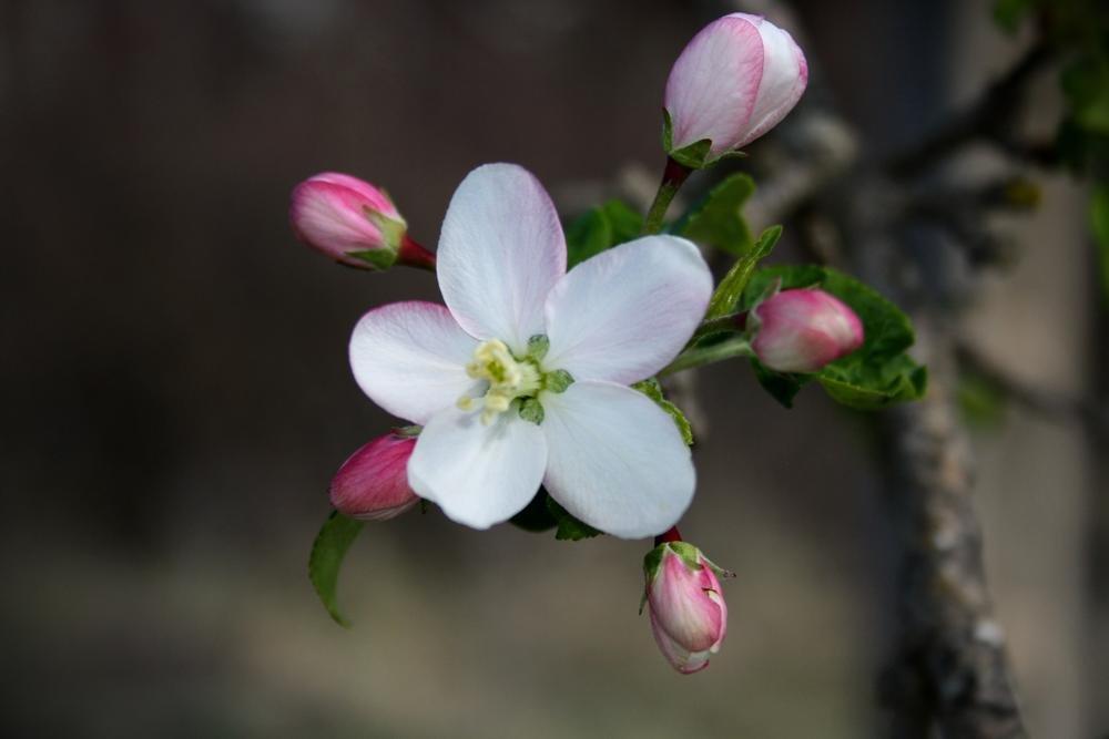 Flora de Baga (Alberto Arcos Hurtado)