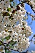 Flores primaverales
