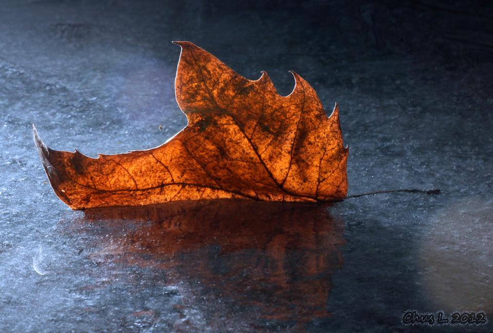 Fuego sobre el hielo (María Jesús López B.)
