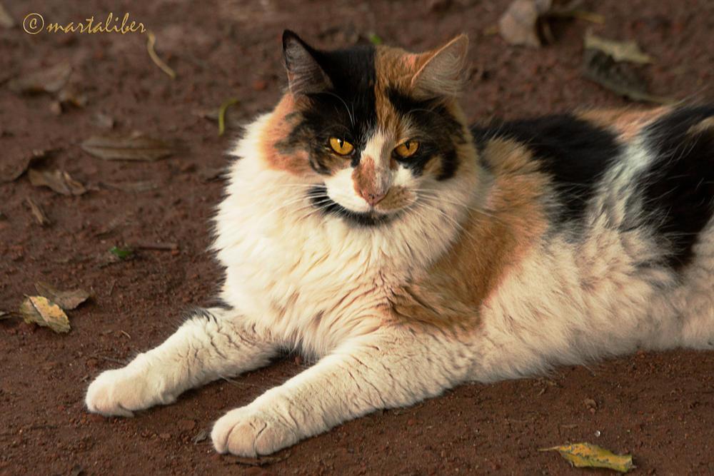 Gato (marta Liber)