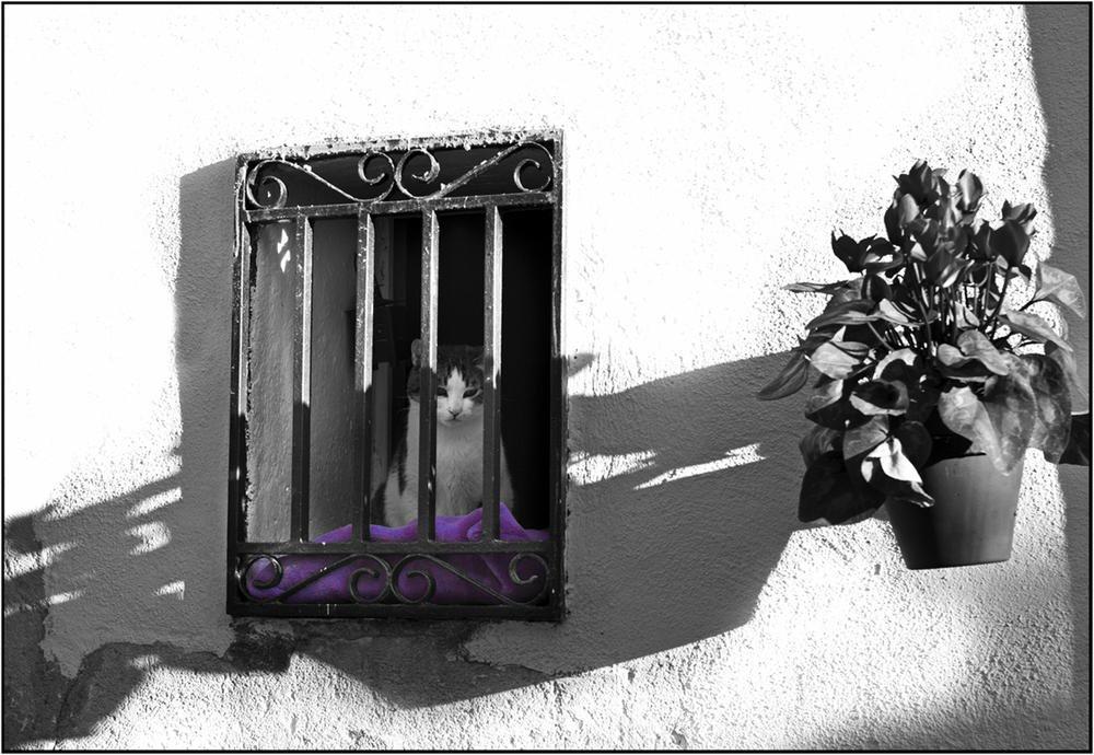 Gato entre rejas (Luis Manso)