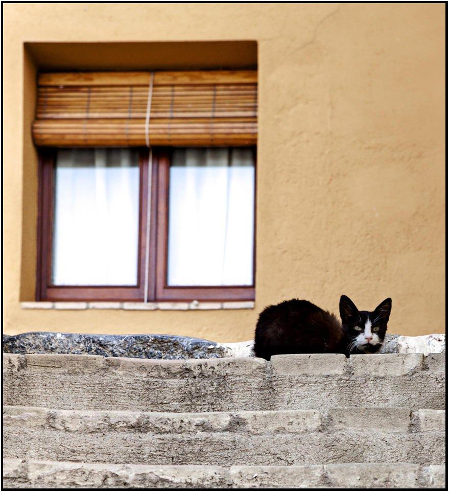 Gato guardian (Luis Manso)