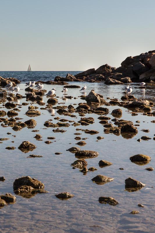 gaviotas con piedras y barco (Jose Luis Rubio Perez)