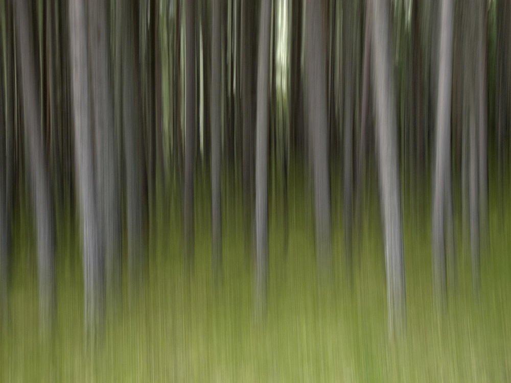 Ghost Forest (Bosque fantasma) (Salvador Solé Soriano)