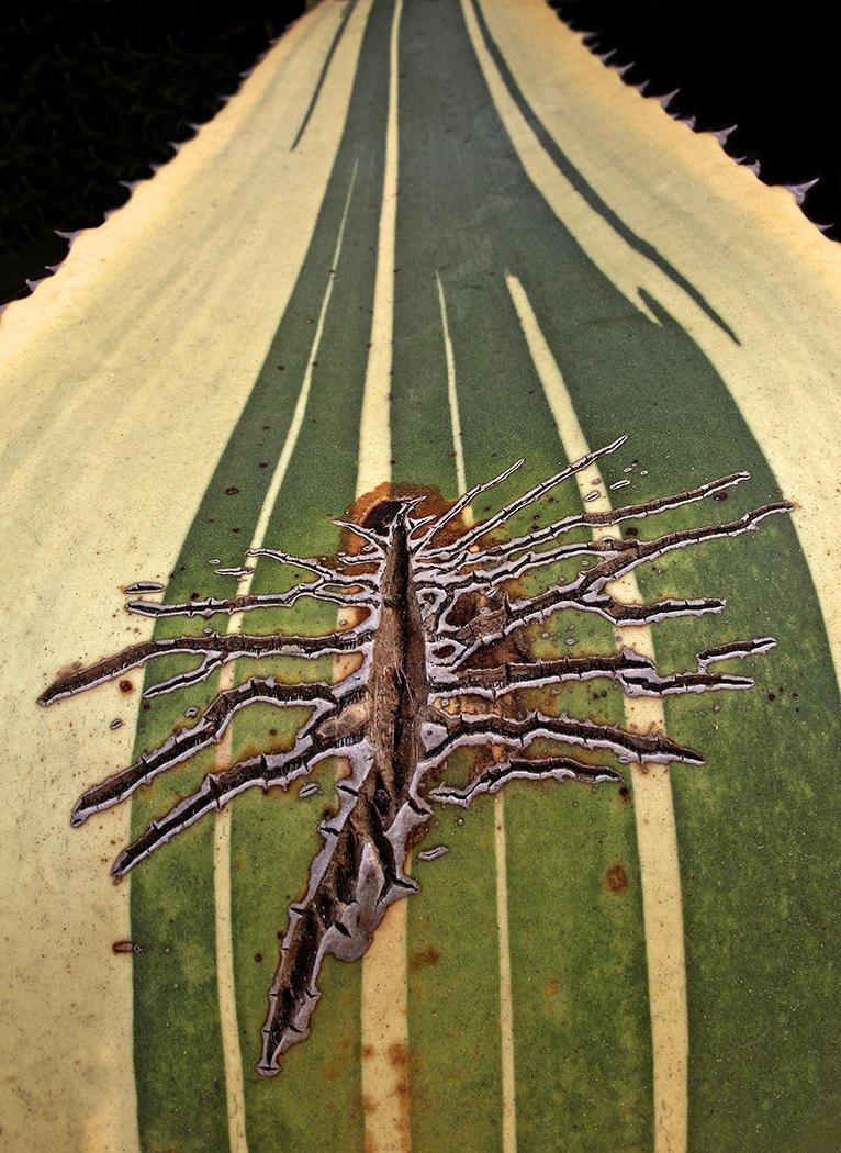 Herida vegetal (Salvador Solé Soriano)