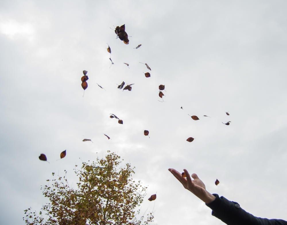 Hojas de otoño (Alba Ahedo)