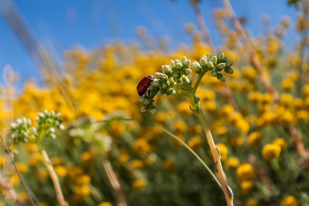 insecto rojo (Jose Luis Rubio Perez)
