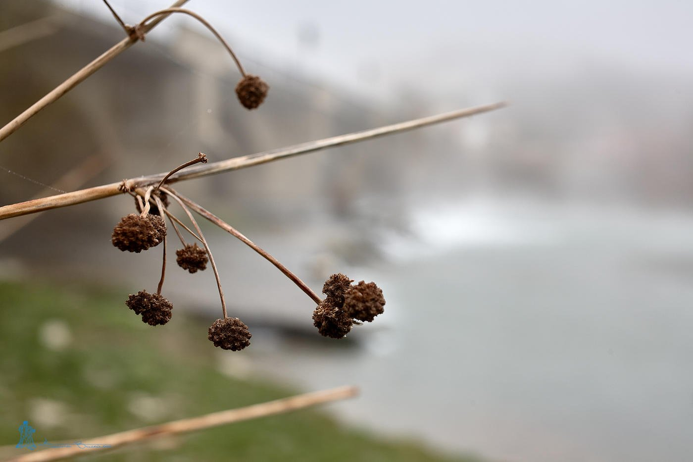 Juncos y nieblas (Txema Bacaicoa (Colectivo IS))