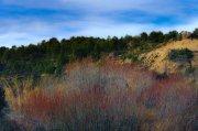la belleza del arbusto seco