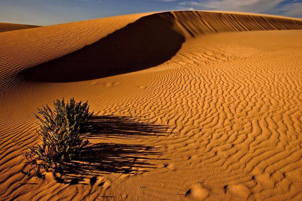 La belleza del desierto (Salvador Solé Soriano)
