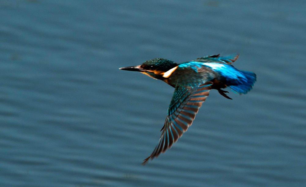 La flecha azul en pleno vuelo (Miguel Ojeda Usillos)