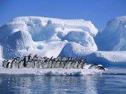 La hermosura de los pinguinos en el hielo.