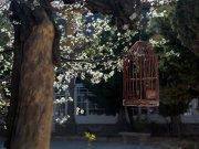 la jaula primaveral