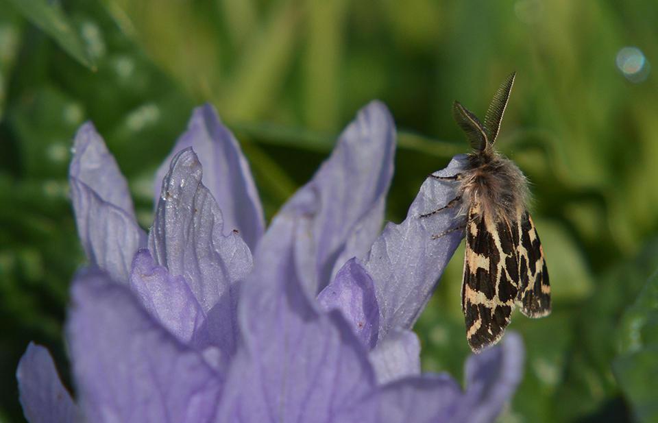 La mandrágora y la mariposa (Alicia Díaz)
