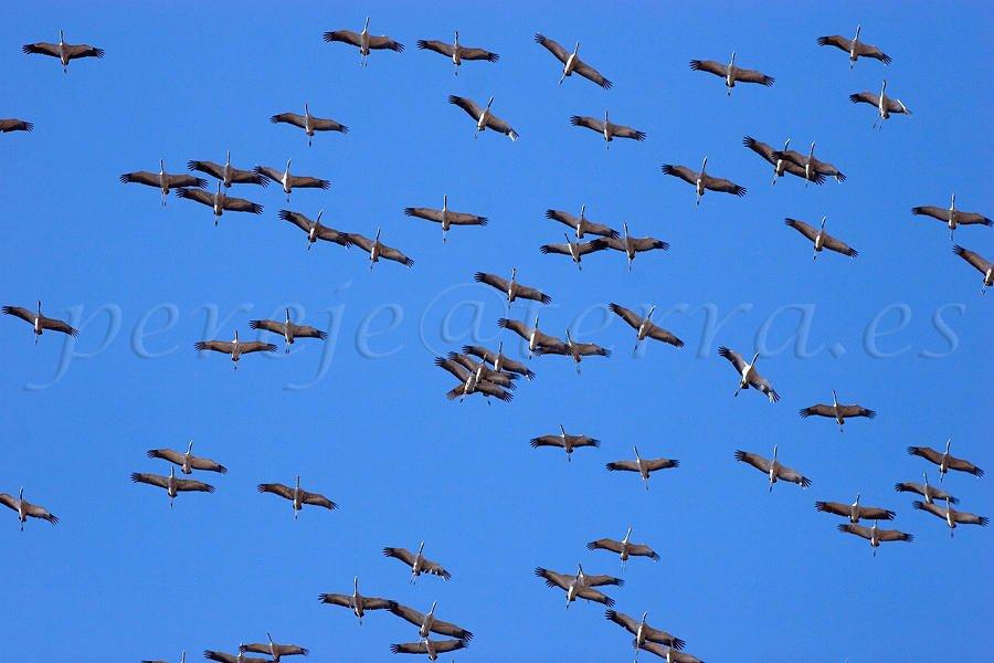 La migración (david Pérez Hens)