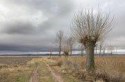 la punta de los árboles (tratamiento habitual)