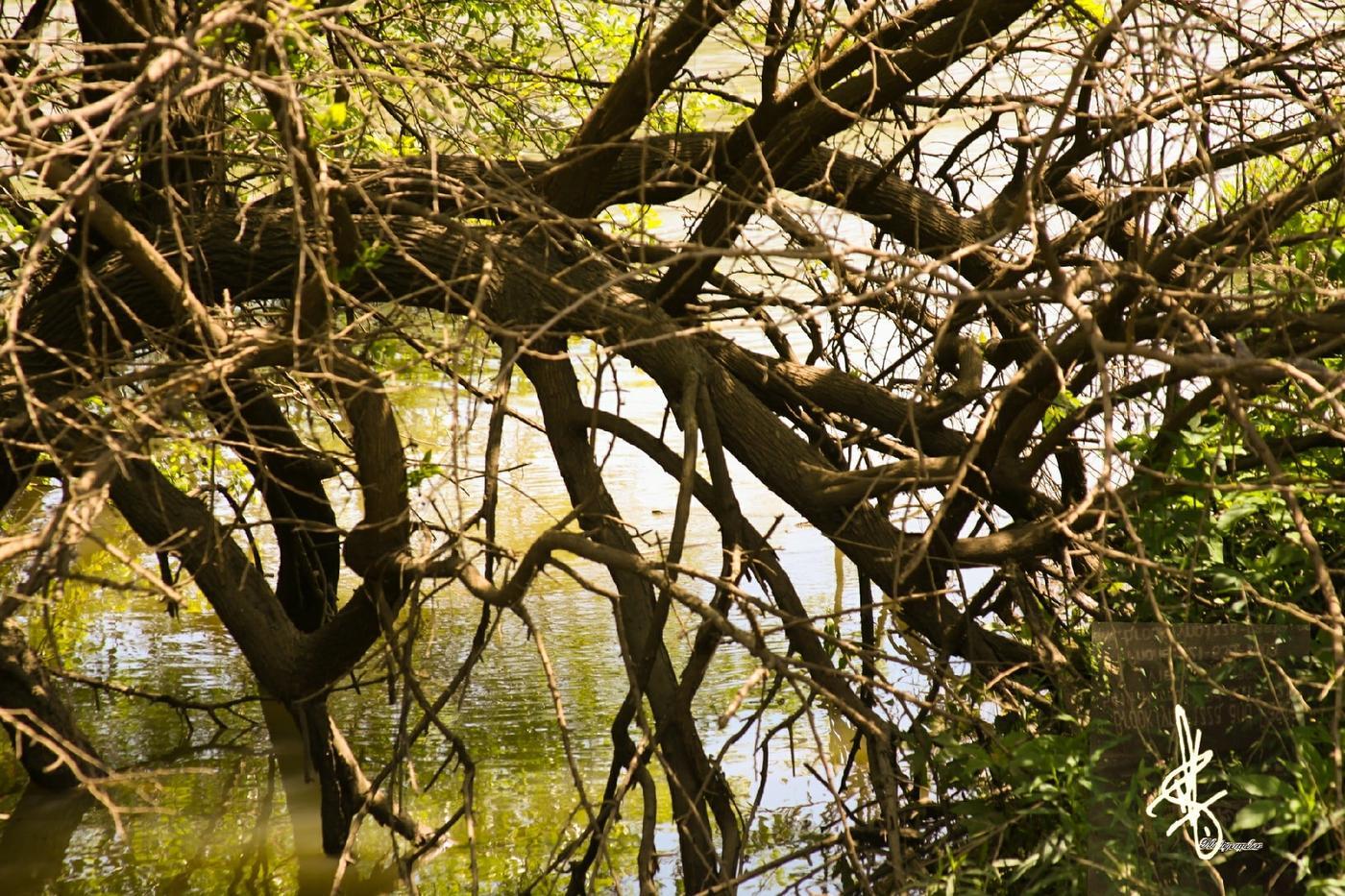 Lago suave (Antonio Rodriguez)