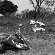las osamentas del Okavango