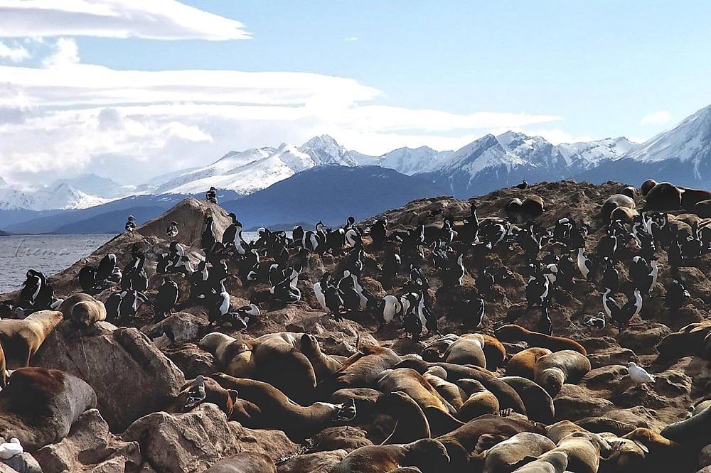 Leones marinos y pinguinos (En realidad, Leones marinos y Cormoranes, gracias Salva) (Txema Bacaicoa (Colectivo IS))