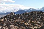 Leones marinos y pinguinos (En realidad, Leones marinos y Cormoranes, gracias Salva)