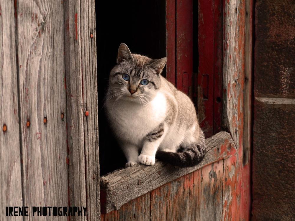 Lindo gatito (Irene Fdez)
