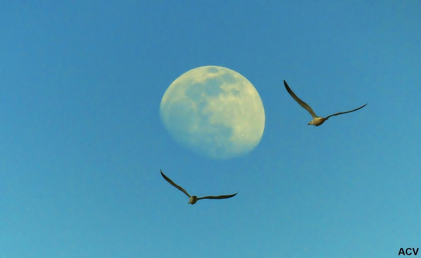 Luna. (Antonio Cuenca.   vaya)