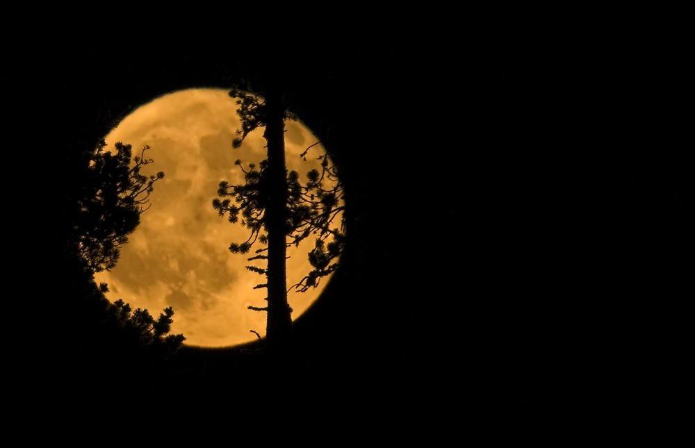 Luna forestal (Salvador Solé Soriano)
