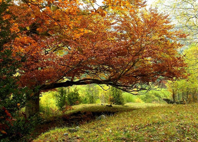 Mágico otoño (Pepi Sánchez Sabater)