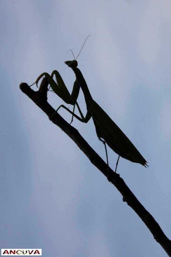 mantis en negativo. (Antonio Cuenca.   vaya)
