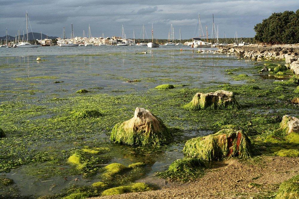 Marina en verde (Txema Bacaicoa (Colectivo IS))