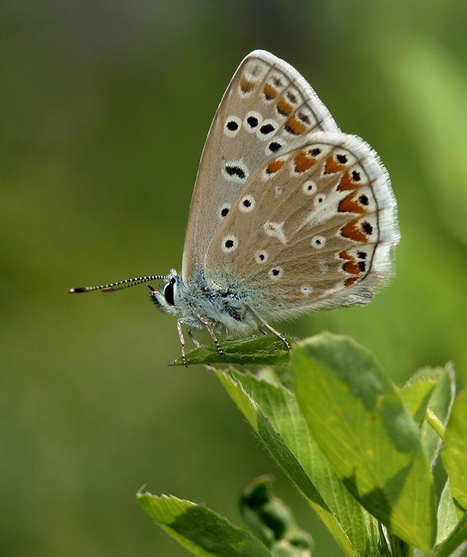 mariposa (Jesús Barreda Carbó)